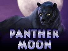 Panther Moon в клубе Вулкан Платинум